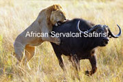 Wildlife Migration Safaris  Serengeti Tanzania